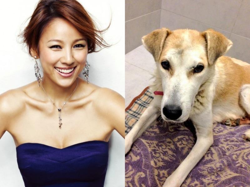 lee hyori and bambi