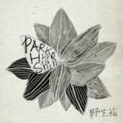 Image of Wild Flower