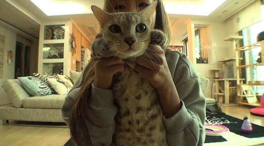 hyorin cat