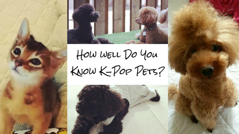 Soompi Quiz How Well Do You Know Your K-Pop Pets?