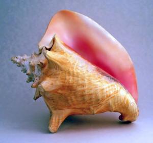 A conch.
