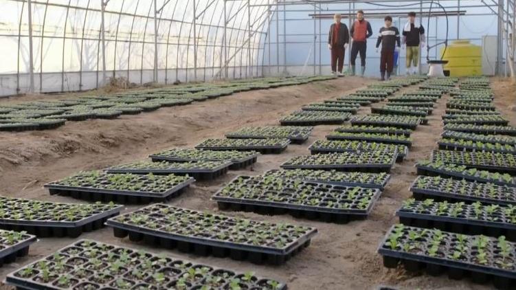 mainfourcabbages_modernfarmer