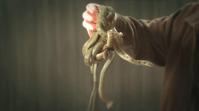pinocchio 7 snakes final