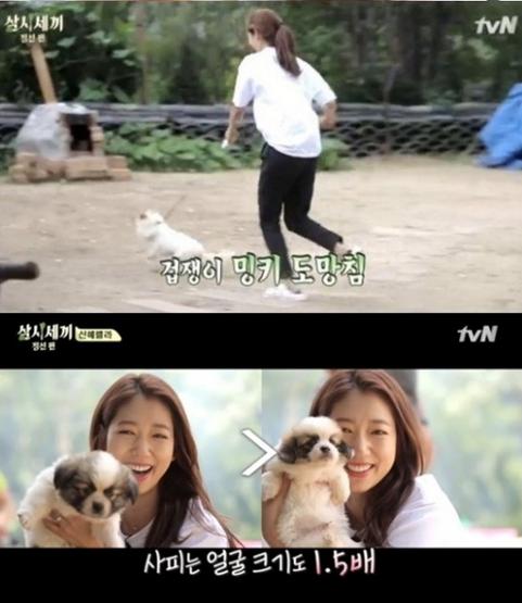 Park Shin Hye 4